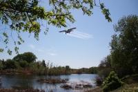 В Волгоградской области началась обработка водоемов от личинок мошки и комара