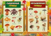 В Волгоградской области участились случаи отравления грибами
